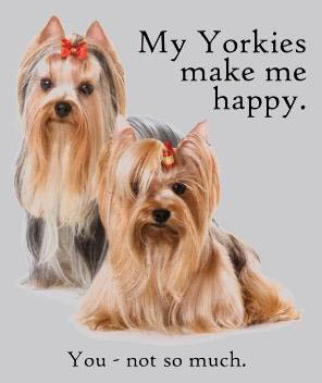 Funny yorkshire terrier pics